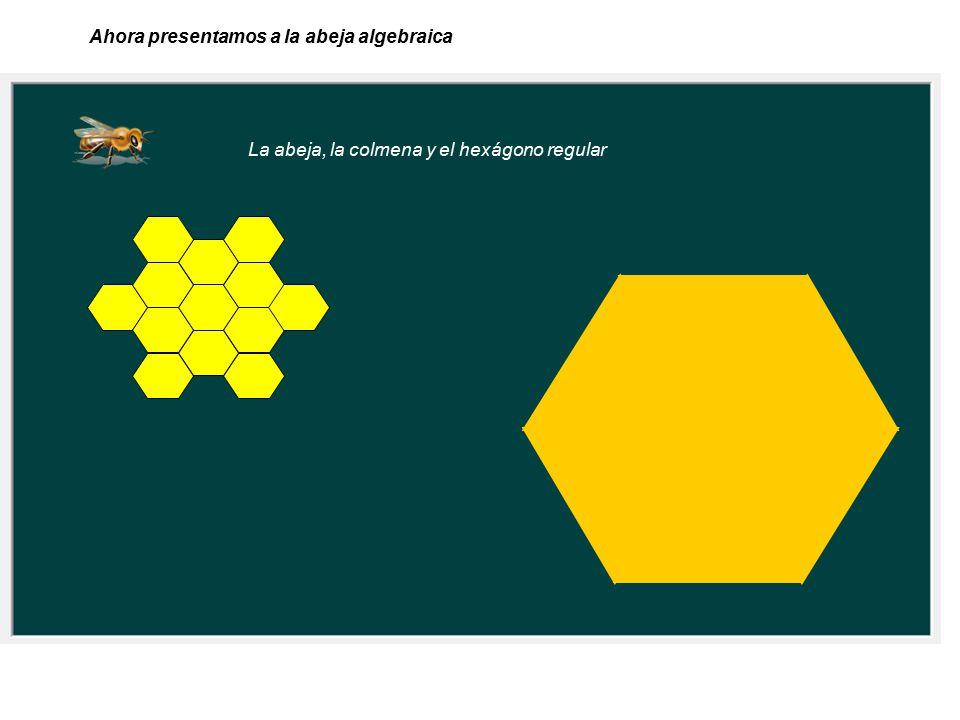 La abeja, la colmena y el hexágono regular Ahora presentamos a la abeja algebraica