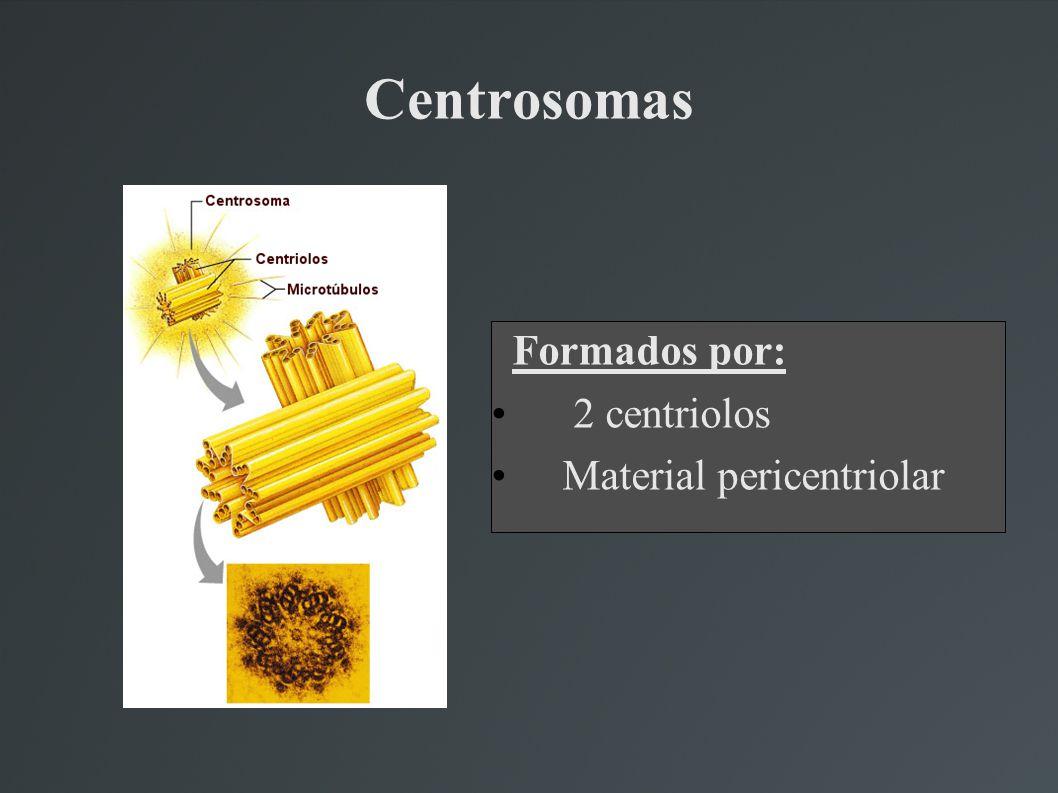 Centrosomas Formados por: 2 centriolos Material pericentriolar