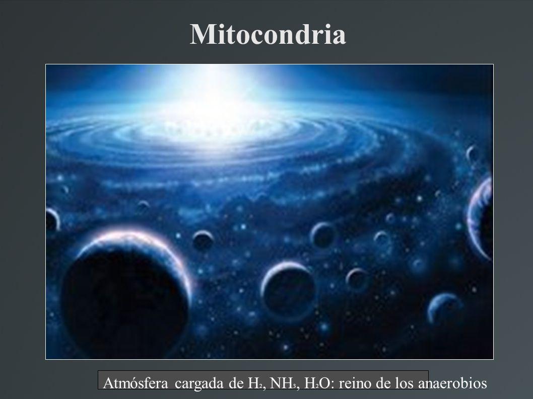 Mitocondria Atmósfera cargada de H 2, NH 3, H 2 O: reino de los anaerobios