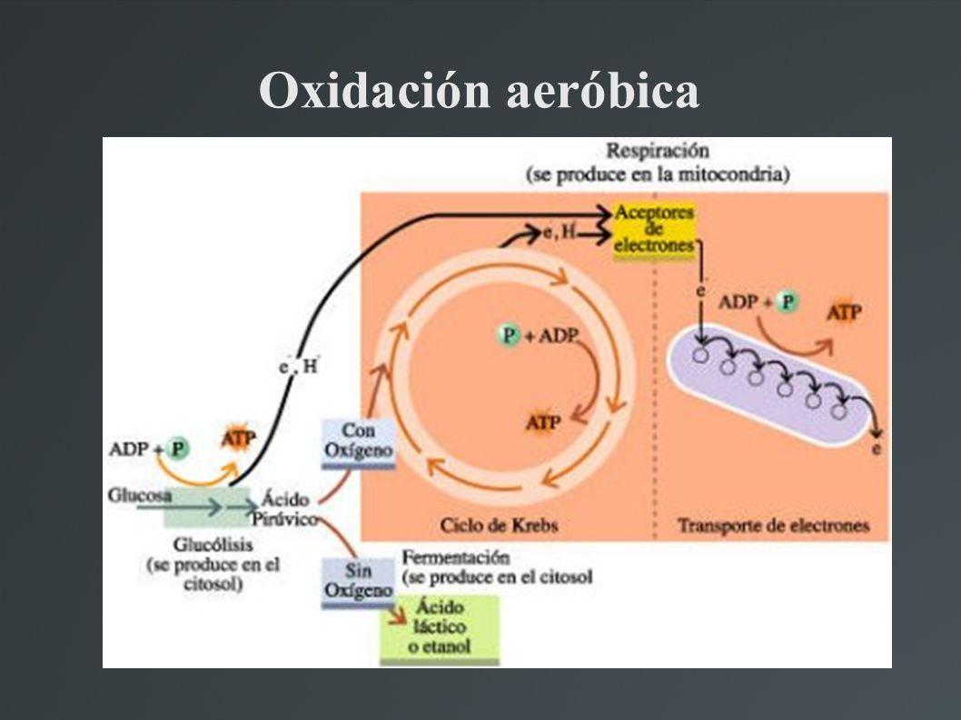 Oxidación aeróbica