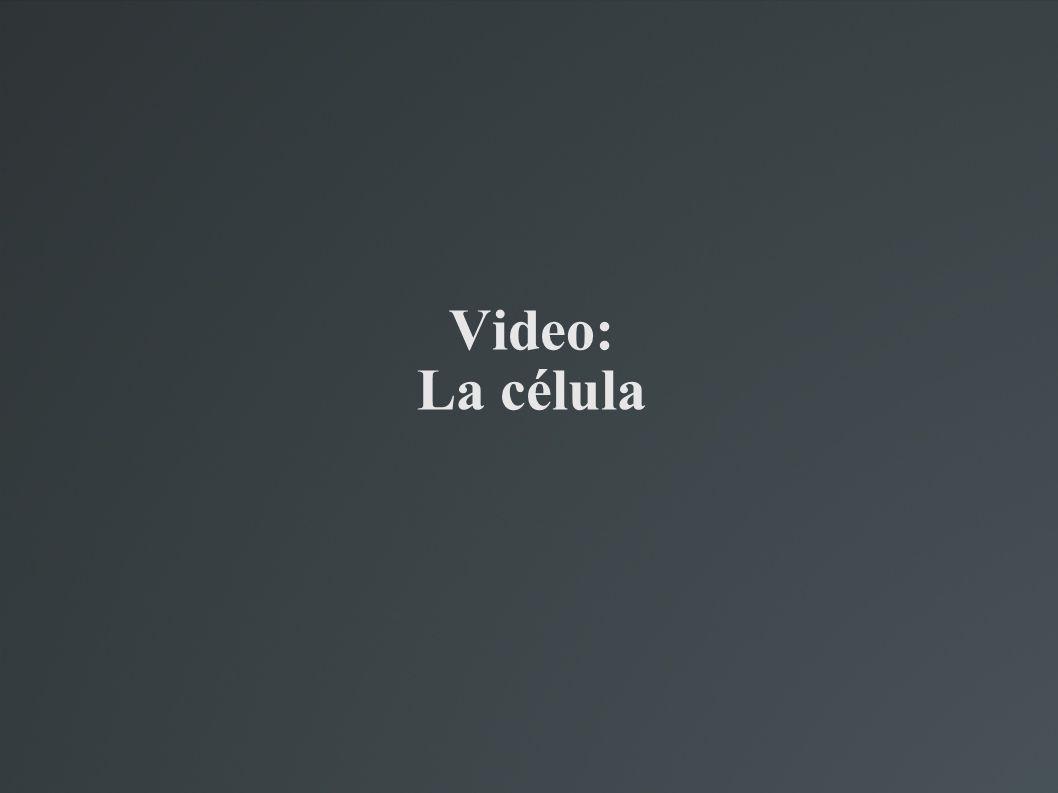 Video: La célula