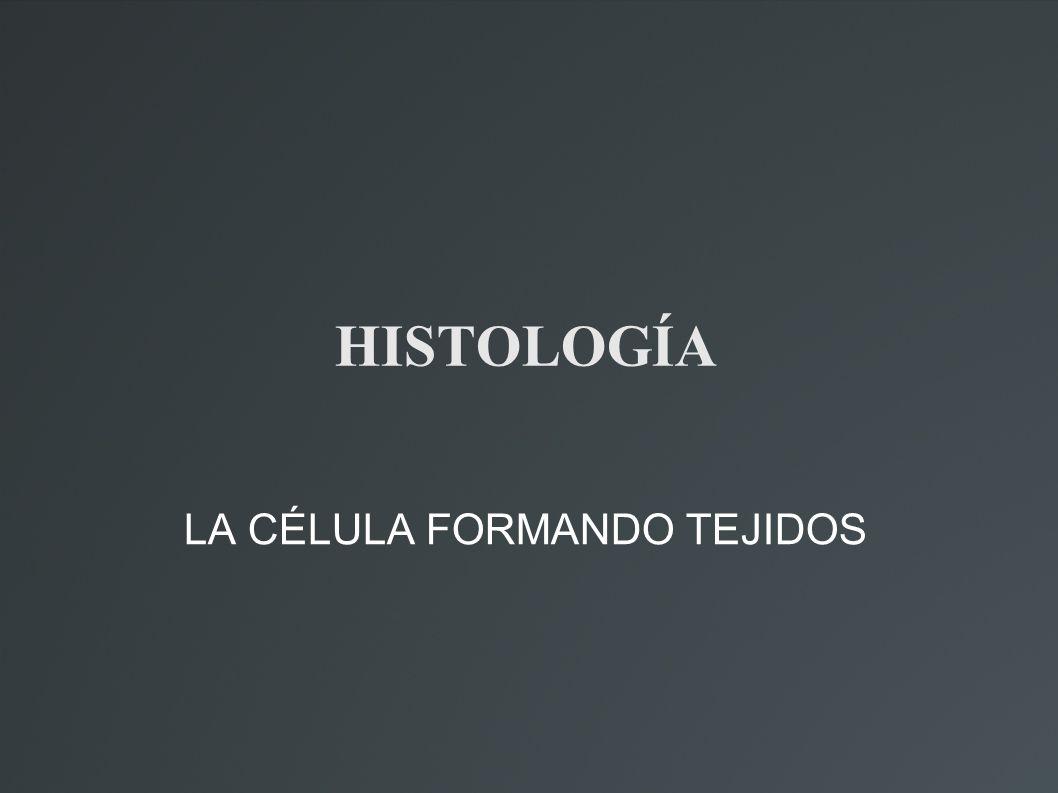 HISTOLOGÍA LA CÉLULA FORMANDO TEJIDOS