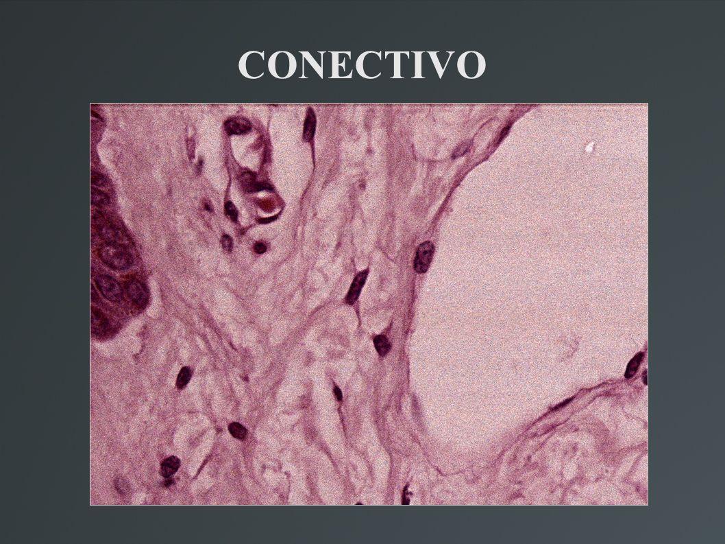 CONECTIVO