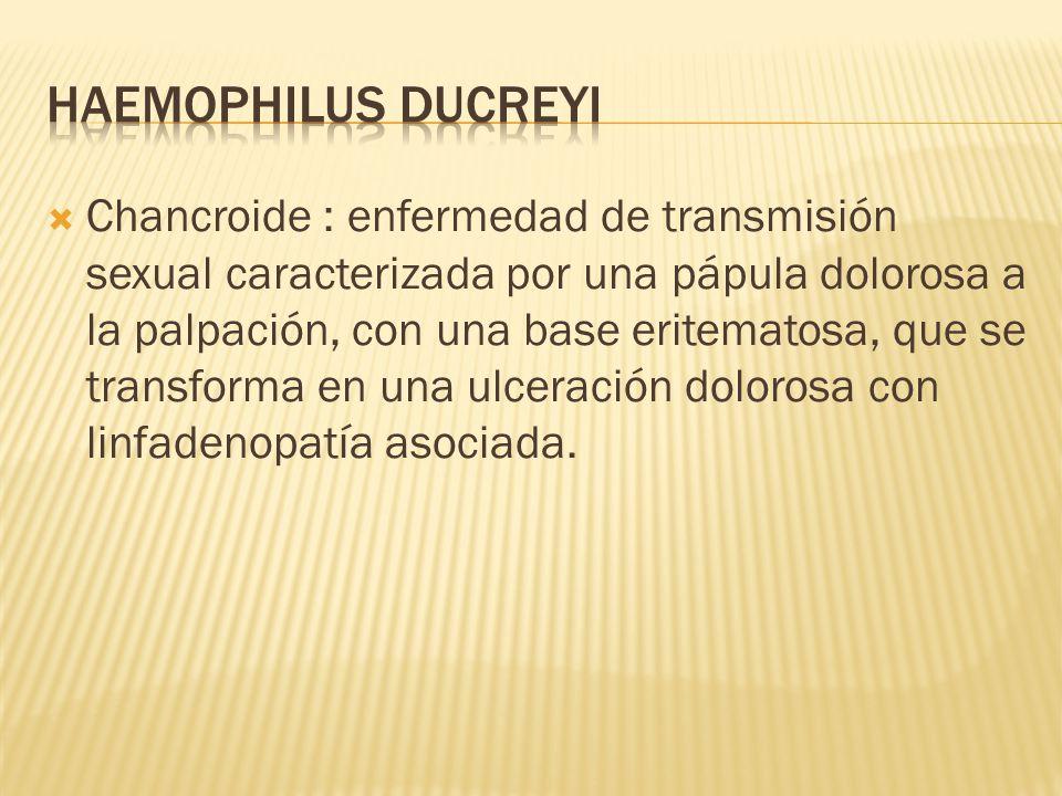  Chancroide : enfermedad de transmisión sexual caracterizada por una pápula dolorosa a la palpación, con una base eritematosa, que se transforma en una ulceración dolorosa con linfadenopatía asociada.