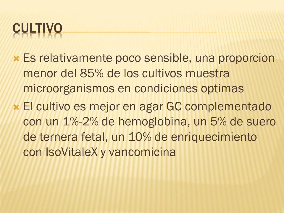  Es relativamente poco sensible, una proporcion menor del 85% de los cultivos muestra microorganismos en condiciones optimas  El cultivo es mejor en agar GC complementado con un 1%-2% de hemoglobina, un 5% de suero de ternera fetal, un 10% de enriquecimiento con IsoVitaleX y vancomicina
