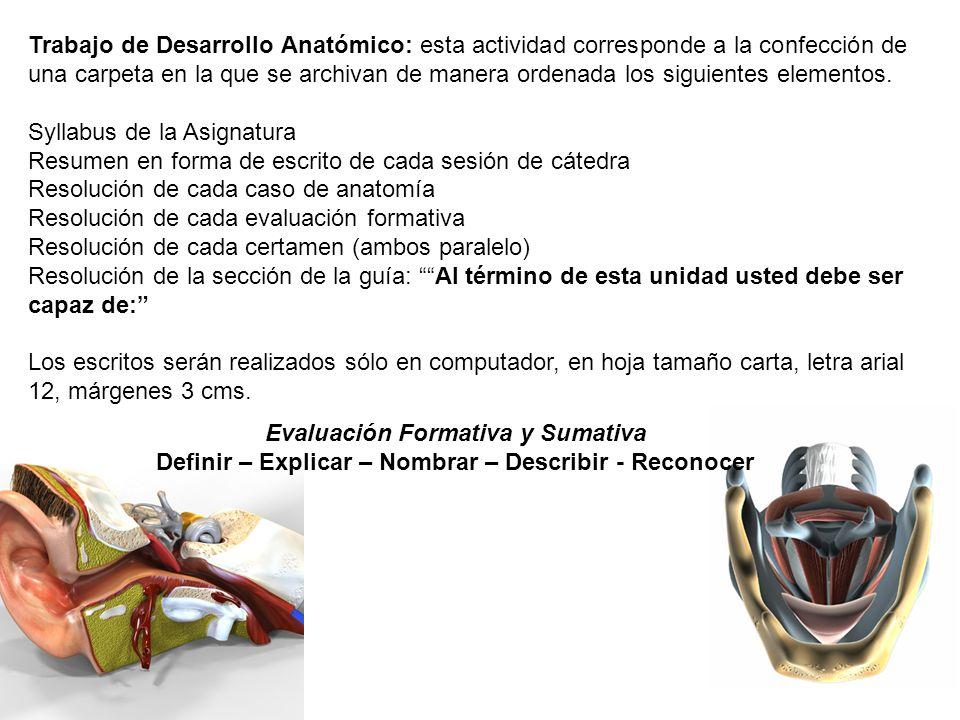 Moderno Definir La Anatomía Del Desarrollo Modelo - Anatomía de Las ...