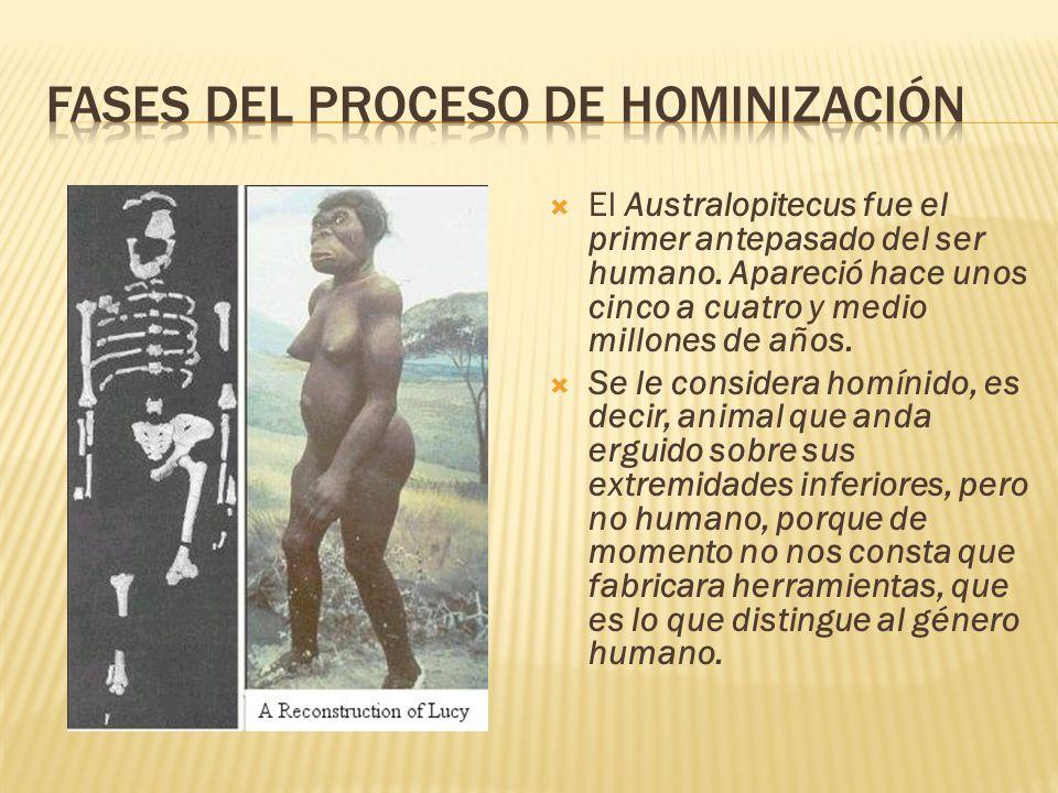  El Australopitecus fue el primer antepasado del ser humano.