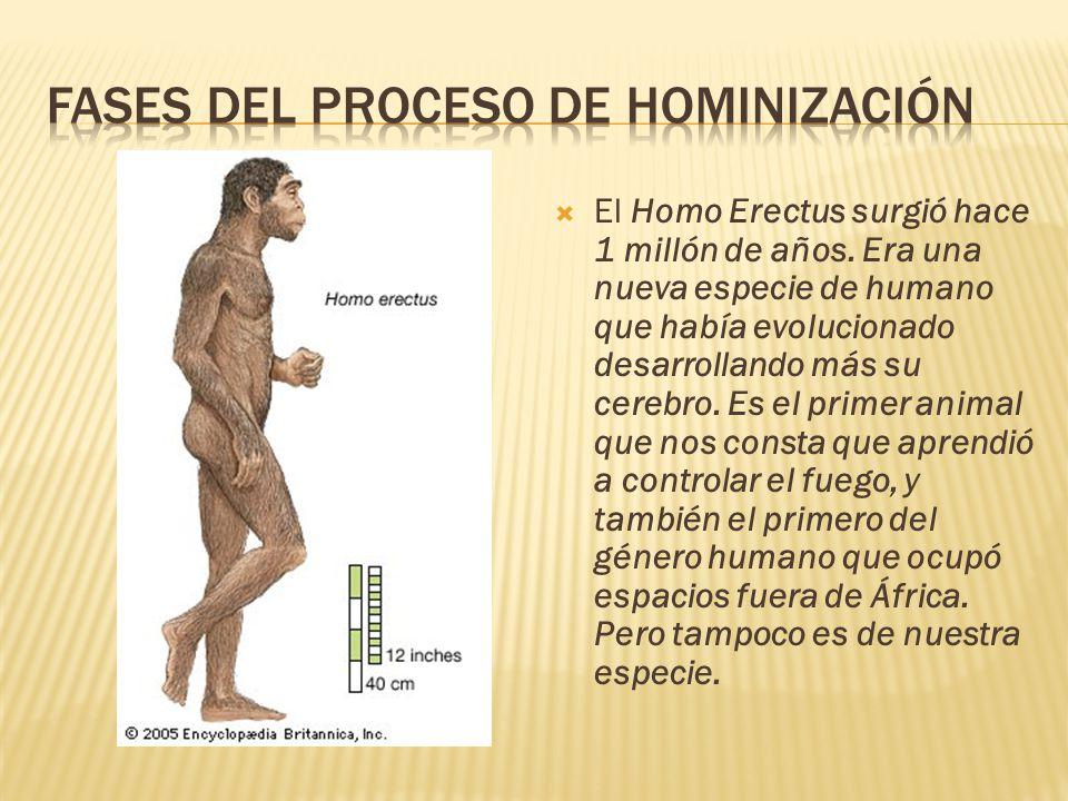  El Homo Erectus surgió hace 1 millón de años.