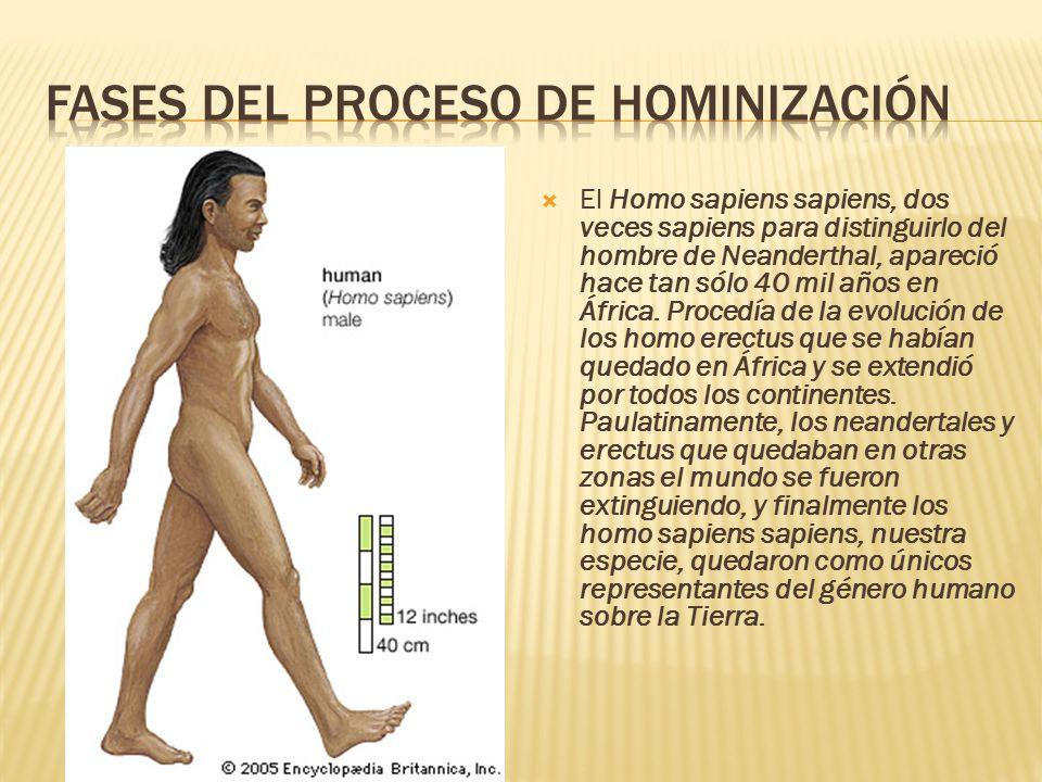  El Homo sapiens sapiens, dos veces sapiens para distinguirlo del hombre de Neanderthal, apareció hace tan sólo 40 mil años en África.
