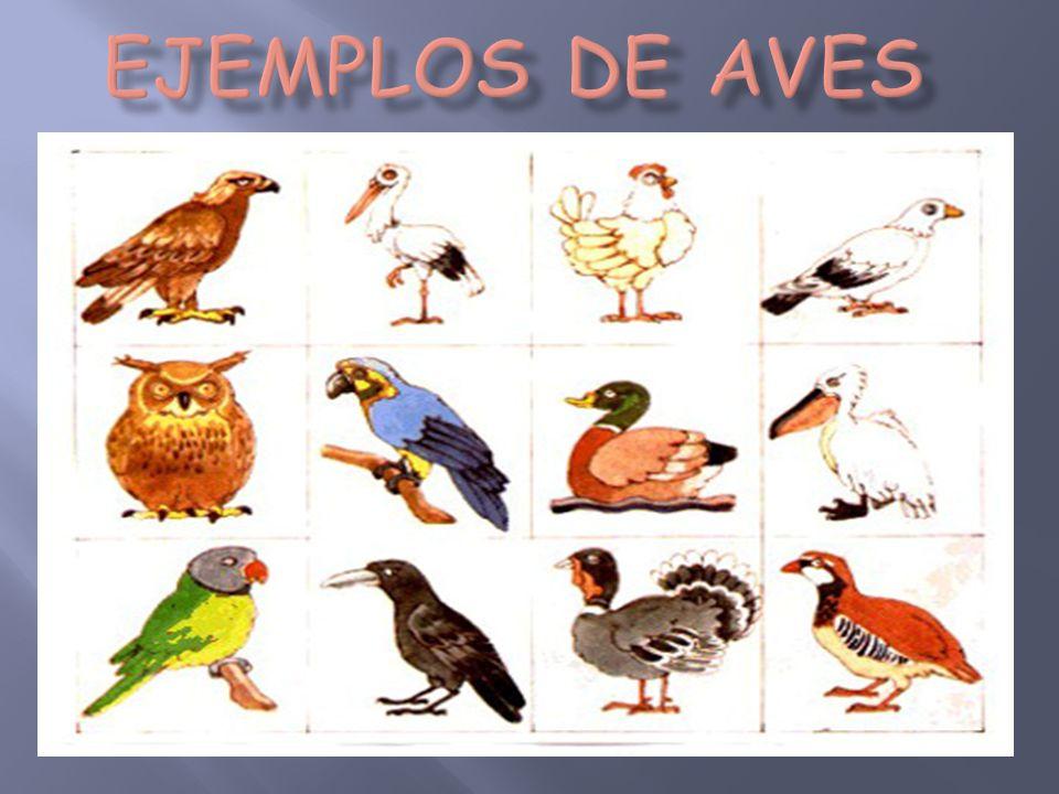 9 Ideas De Vivíparos Animales Oviparos Clasificación De Animales Animales