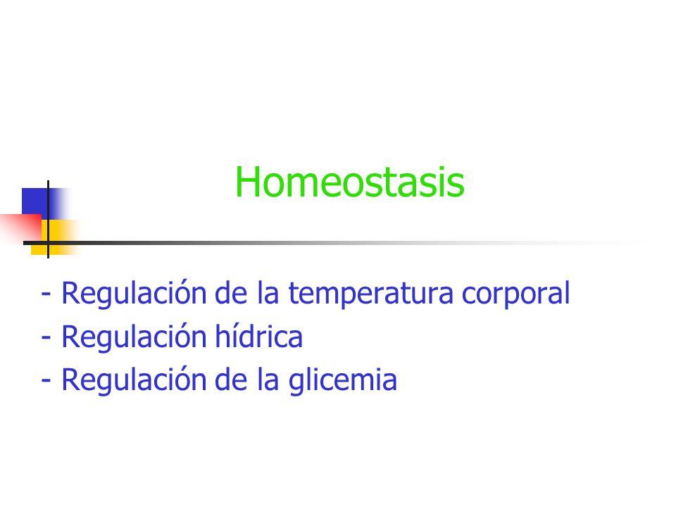 Equilibrio hídrico La composición de la sangre y su medio químico se regula en su mayoría por el SISTEMA EXCRETOR
