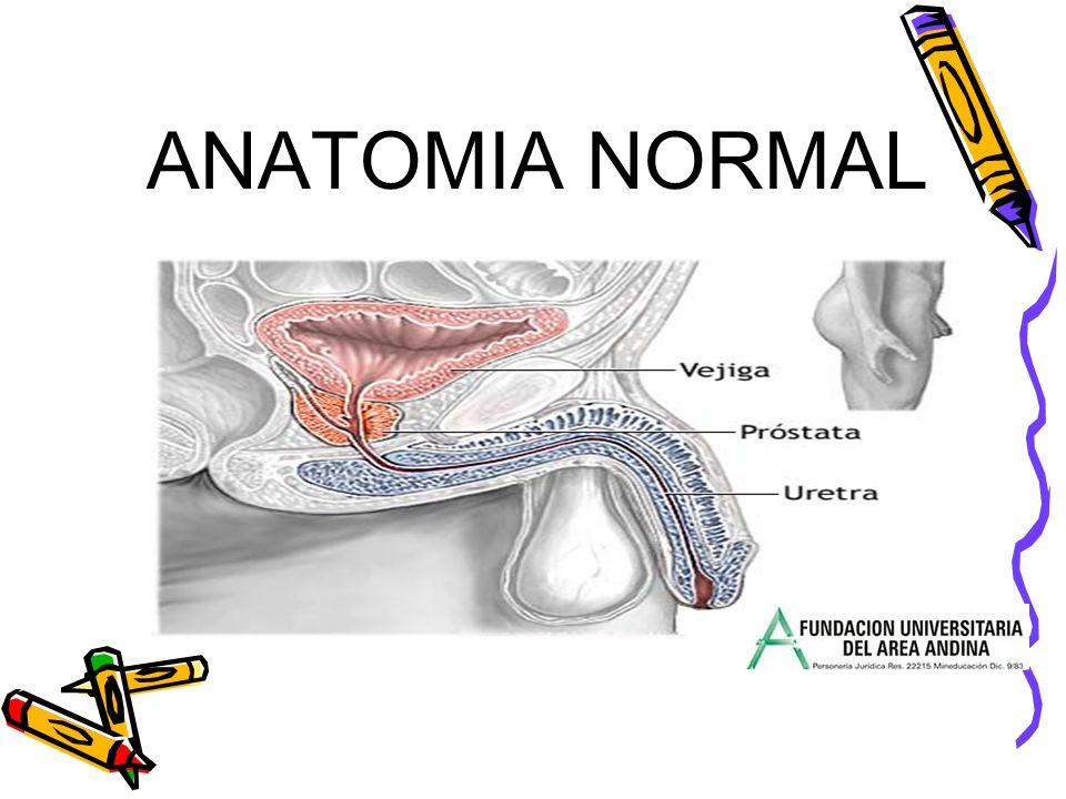 LA PROSTATA La próstata es una glándula del sistema reproductor masculino, localizada delante del recto y debajo de la vejiga.