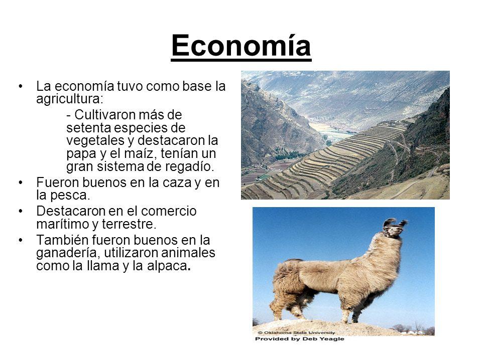 Economía La economía tuvo como base la agricultura: - Cultivaron más de setenta especies de vegetales y destacaron la papa y el maíz, tenían un gran s