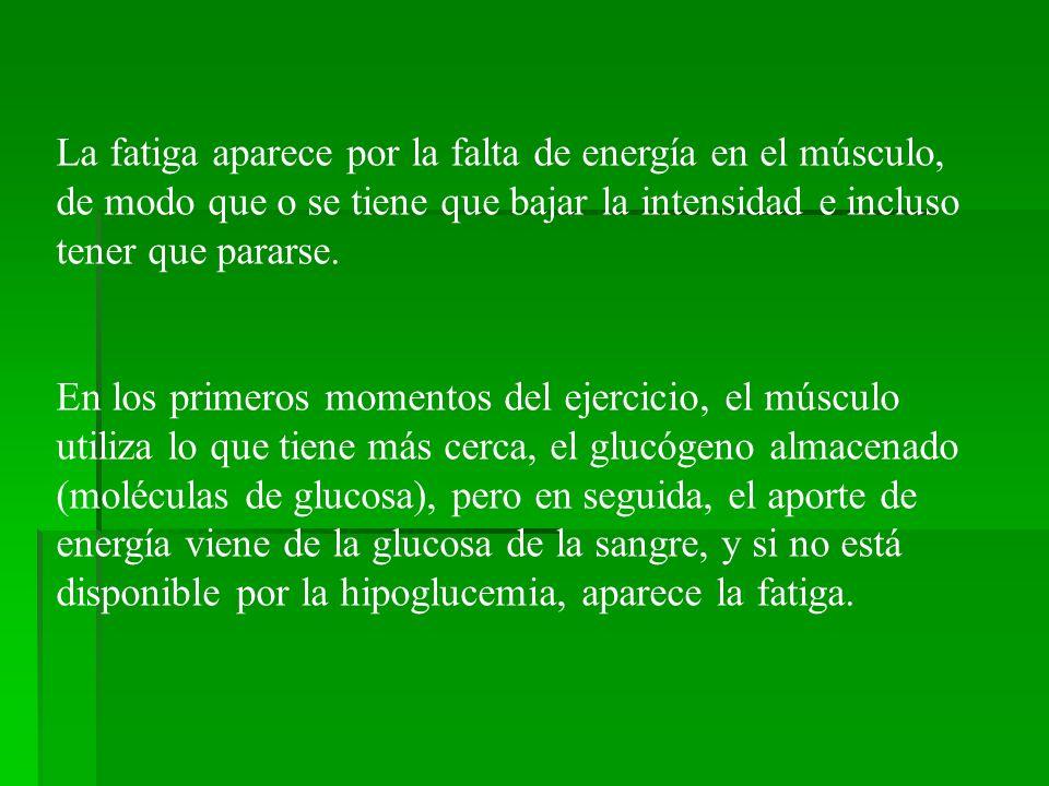 La fatiga aparece por la falta de energía en el músculo, de modo que o se tiene que bajar la intensidad e incluso tener que pararse.