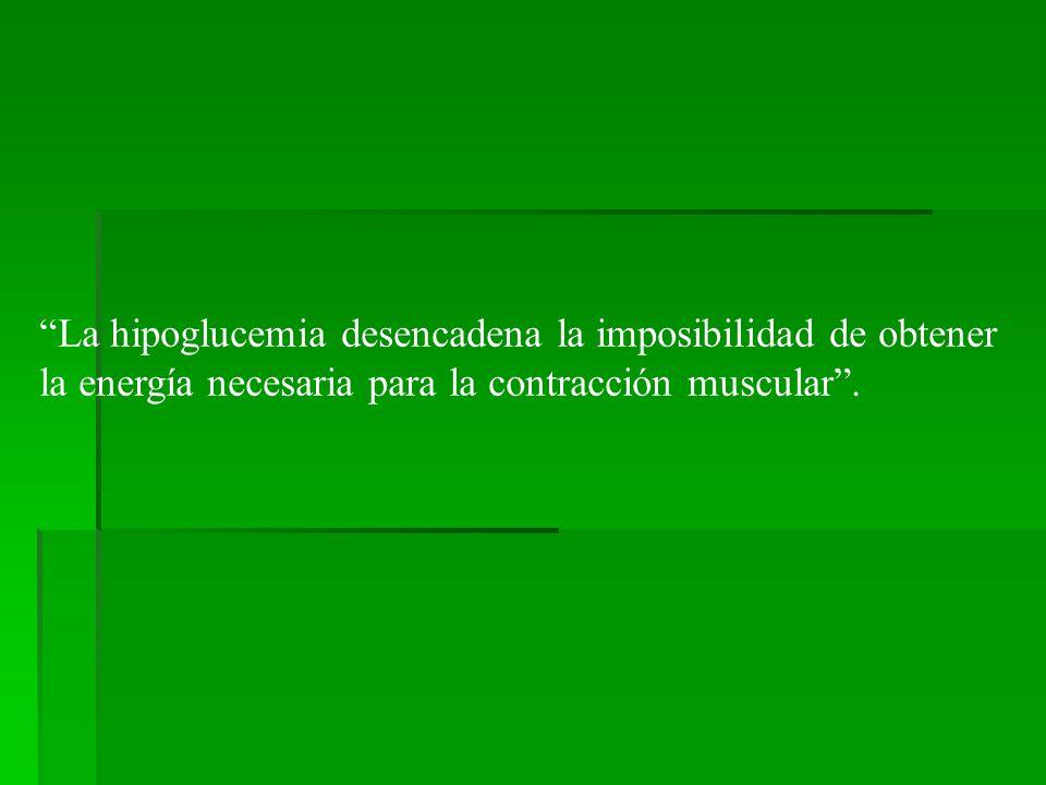 La hipoglucemia desencadena la imposibilidad de obtener la energía necesaria para la contracción muscular.