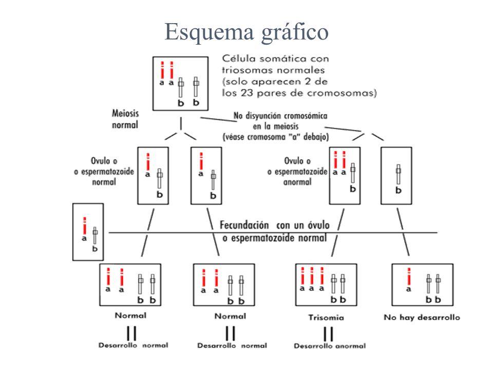 Esquema gráfico