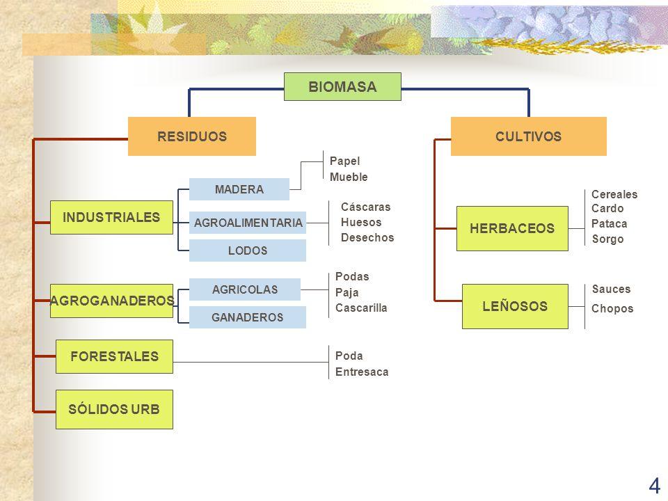 15 CONVERSIÓN DE LA BIOMASA EN ENERGÍA II GASIFICACIÓN CON PRODUCCIÓN DE CO, H, y CH 4 CON VAPOR DE AGUA Y AIRE CON VAPOR DE AGUA Y OXIGENO BAJA EFICIENCIA (35%) 10-20 MWe 1,5-2,0 M/MWe ALTA EFICIENCIA (con ciclo combinado) 15-20 MWe COSTE 2,5 DIGESTIÓN ANAEROBIA DESCOMPOSICIÓN BACTERIANA DE LA MATERIA ORGÁNICA EN AUSENCIA DE AIRE DIGESTORES (CONTENIDO DE METANO DEL 50 AL 70 % CON UNA EFICIENCIA DEL 60%) VERTEDEROS CONTROLADOS
