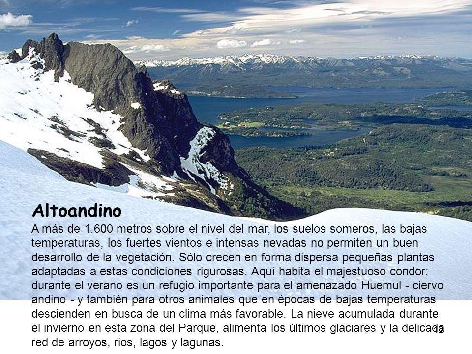 12 Altoandino A más de 1.600 metros sobre el nivel del mar, los suelos someros, las bajas temperaturas, los fuertes vientos e intensas nevadas no perm