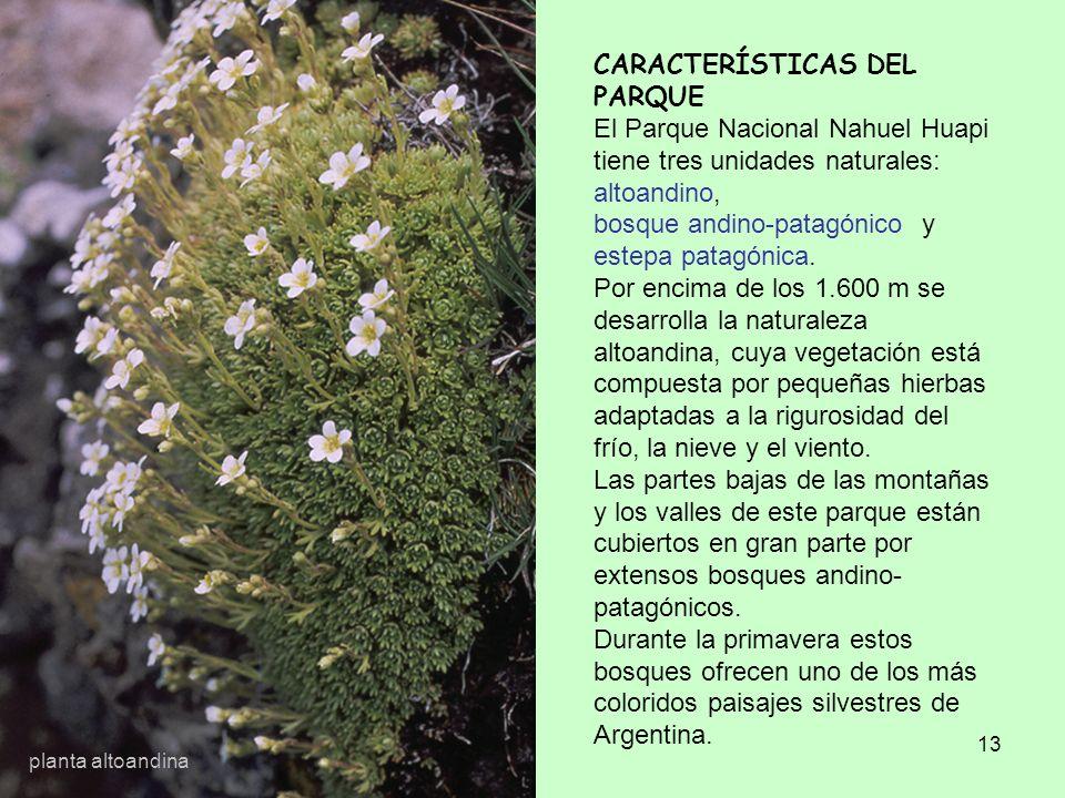 13 CARACTERÍSTICAS DEL PARQUE El Parque Nacional Nahuel Huapi tiene tres unidades naturales: altoandino, bosque andino-patagónico y estepa patagónica.