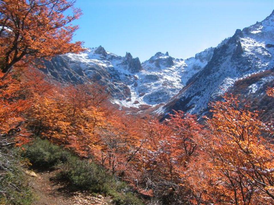 15 Bosque Húmedo Ocupa las laderas y valles, por debajo del ambiente altoandino.