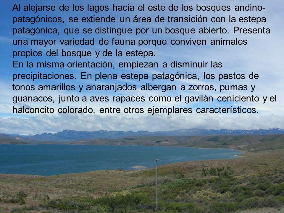 26 Al alejarse de los lagos hacia el este de los bosques andino- patagónicos, se extiende un área de transición con la estepa patagónica, que se disti