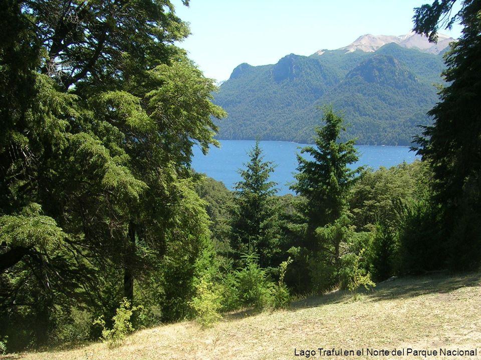 33 Lago Traful en el Norte del Parque Nacional