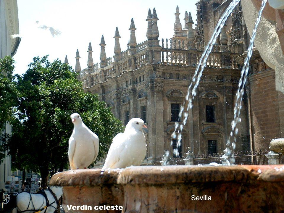 Toledo Ave Maria