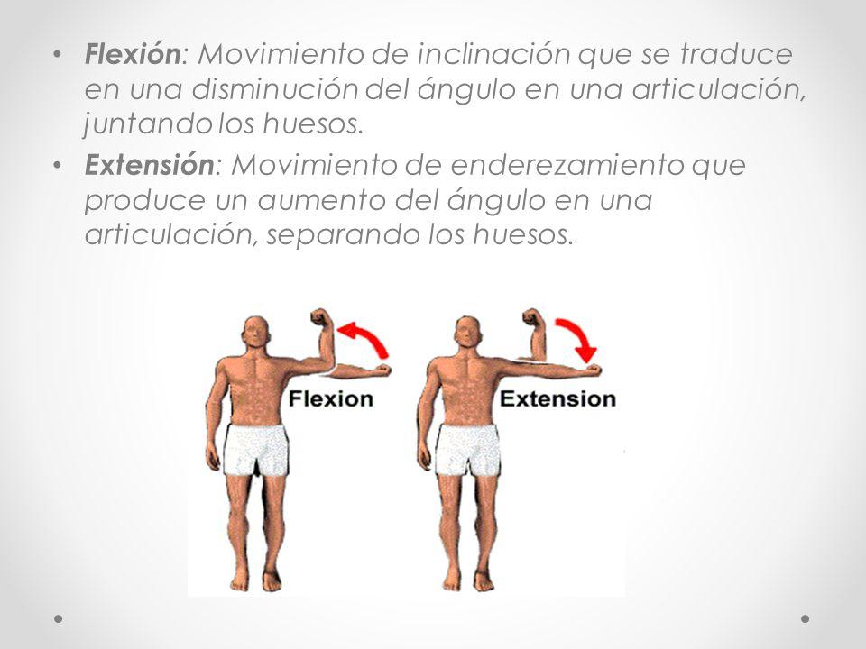 Flexión : Movimiento de inclinación que se traduce en una disminución del ángulo en una articulación, juntando los huesos. Extensión : Movimiento de e