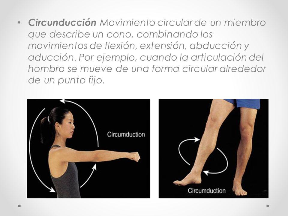 Circunducción Movimiento circular de un miembro que describe un cono, combinando los movimientos de flexión, extensión, abducción y aducción. Por ejem