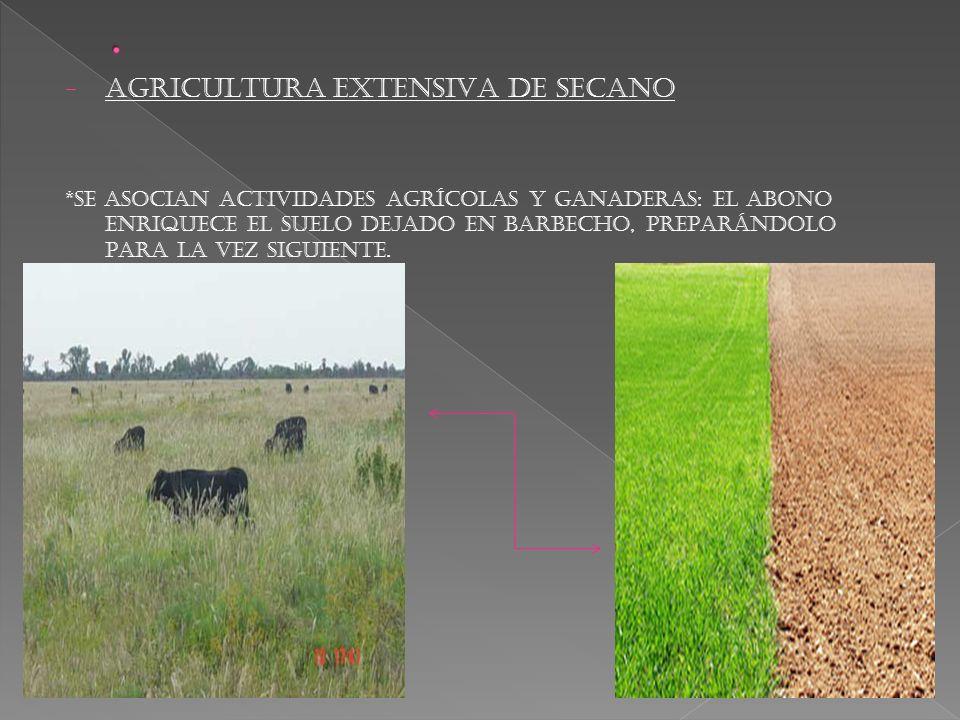 - AGRICULTURA EXTENSIVA DE SECANO *SE ASOCIAN ACTIVIDADES AGRÍCOLAS Y GANADERAS: EL ABONO ENRIQUECE EL SUELO DEJADO EN BARBECHO, PREPARÁNDOLO PARA LA VEZ SIGUIENTE.