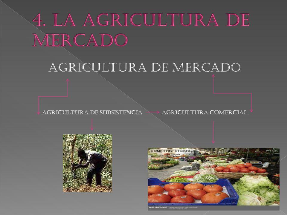 AGRICULTURA DE MERCADO AGRICULTURA DE SUBSISTENCIA AGRICULTURA COMERCIAL