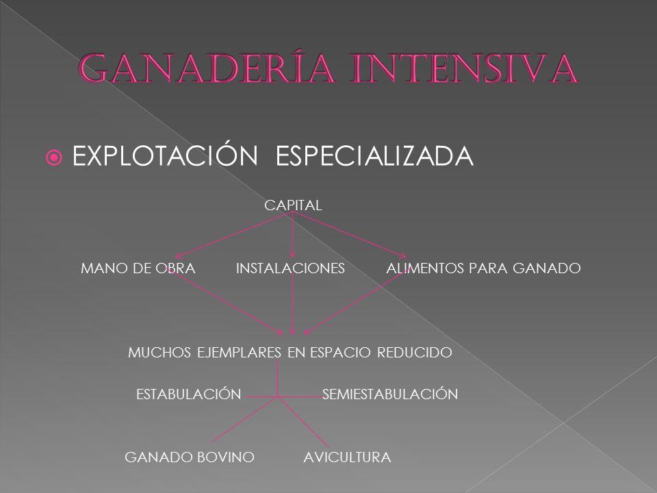  EXPLOTACIÓN ESPECIALIZADA CAPITAL MANO DE OBRA INSTALACIONES ALIMENTOS PARA GANADO MUCHOS EJEMPLARES EN ESPACIO REDUCIDO ESTABULACIÓN SEMIESTABULACIÓN GANADO BOVINO AVICULTURA