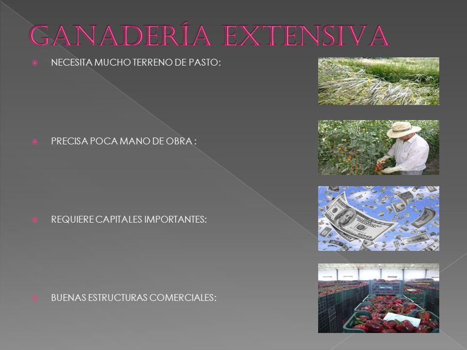  NECESITA MUCHO TERRENO DE PASTO:  PRECISA POCA MANO DE OBRA :  REQUIERE CAPITALES IMPORTANTES:  BUENAS ESTRUCTURAS COMERCIALES: