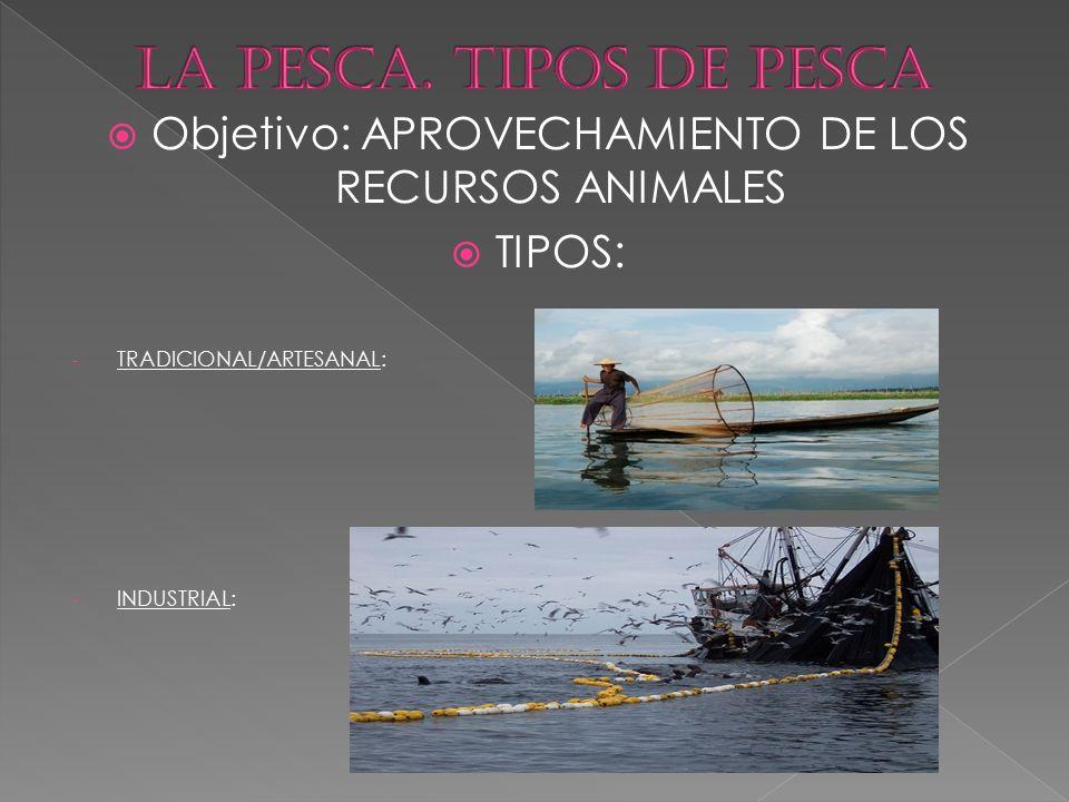  Objetivo: APROVECHAMIENTO DE LOS RECURSOS ANIMALES  TIPOS: - TRADICIONAL/ARTESANAL: - INDUSTRIAL: