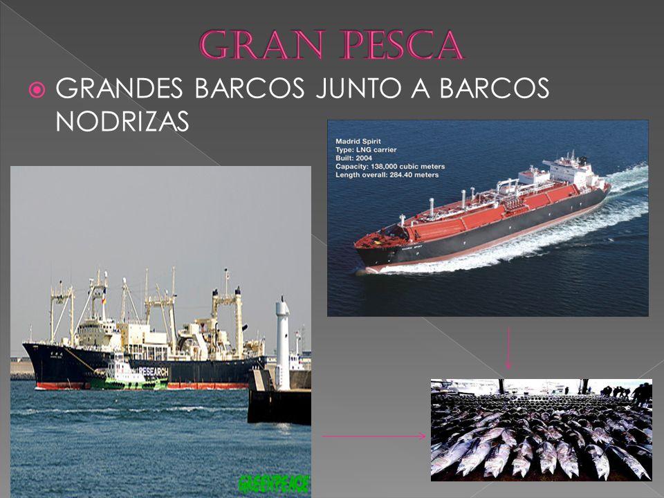  GRANDES BARCOS JUNTO A BARCOS NODRIZAS
