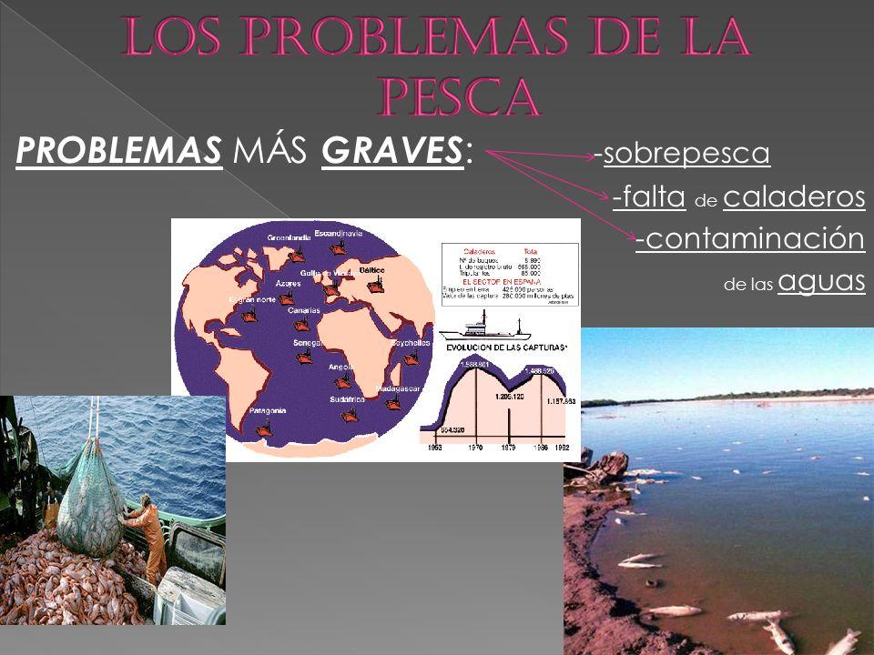 PROBLEMAS MÁS GRAVES : -sobrepesca -falta de caladeros -contaminación de las aguas