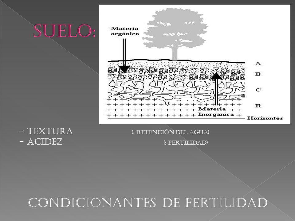 - TEXTURA (: RETENCIÓN DEL AGUA) - ACIDEZ (: FERTILIDAD) CONDICIONANTES DE FERTILIDAD