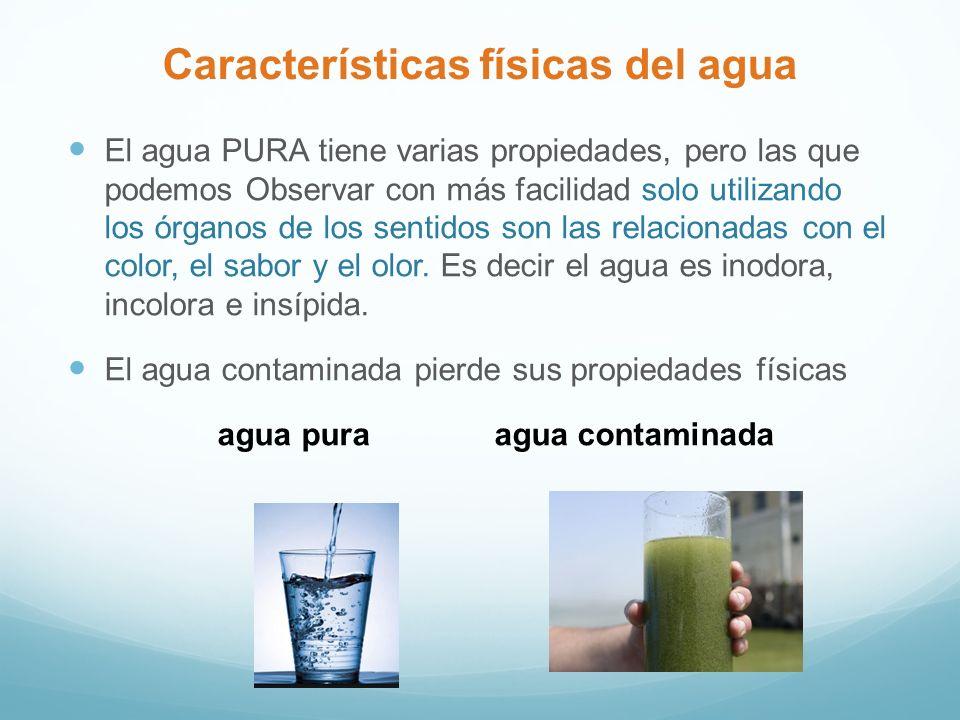 Características físicas del agua El agua PURA tiene varias propiedades, pero las que podemos Observar con más facilidad solo utilizando los órganos de los sentidos son las relacionadas con el color, el sabor y el olor.
