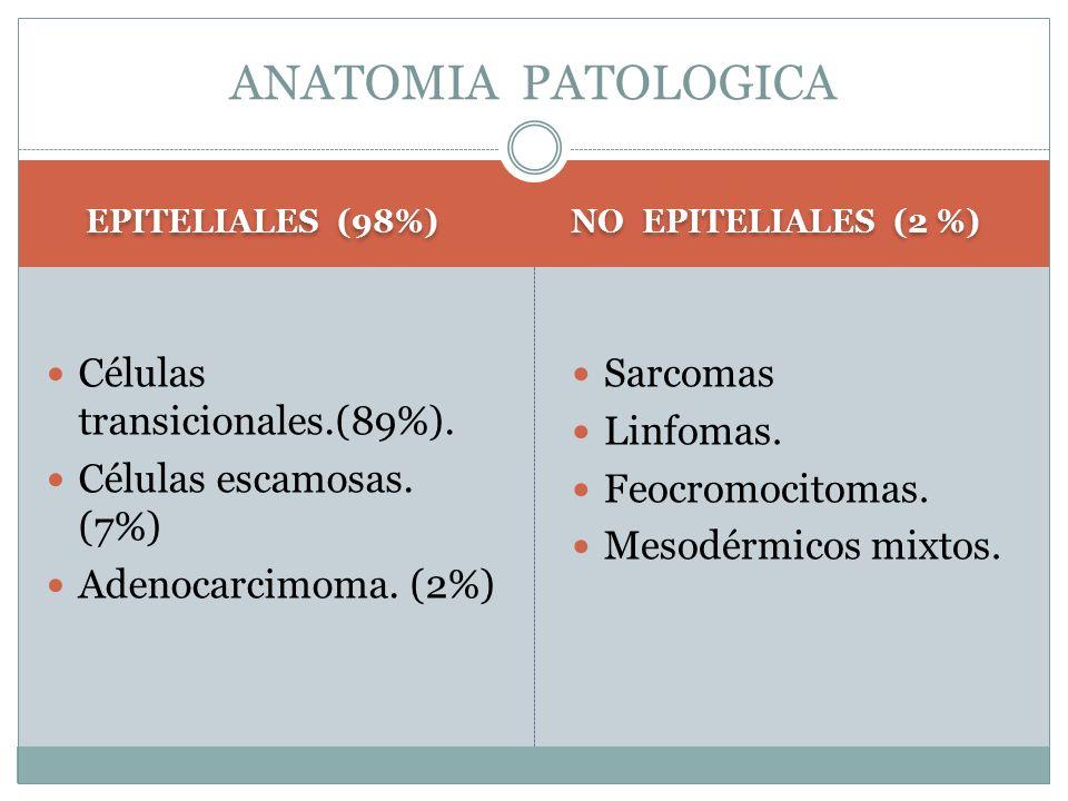 EPITELIALES (98%) NO EPITELIALES (2 %) Células transicionales.(89%). Células escamosas. (7%) Adenocarcimoma. (2%) Sarcomas Linfomas. Feocromocitomas.