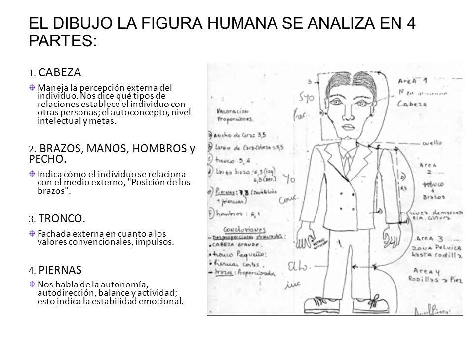 EL DIBUJO LA FIGURA HUMANA SE ANALIZA EN 4 PARTES: 1.