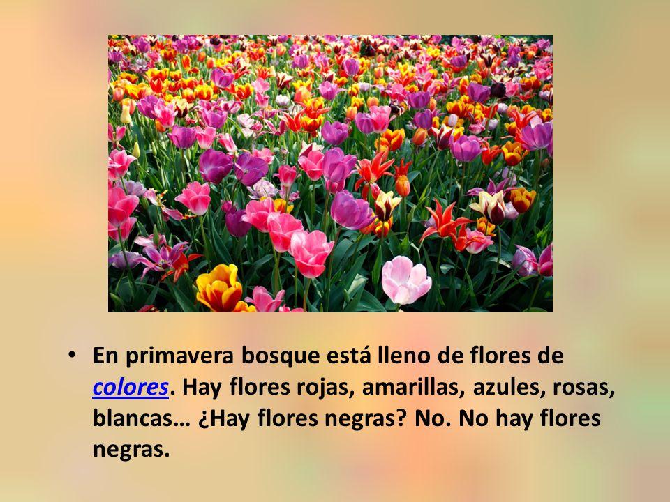 En primavera bosque está lleno de flores de colores.