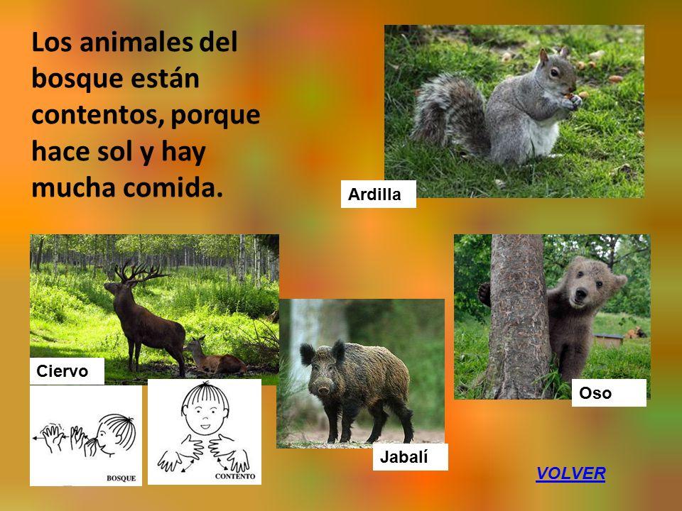 Los animales del bosque están contentos, porque hace sol y hay mucha comida.