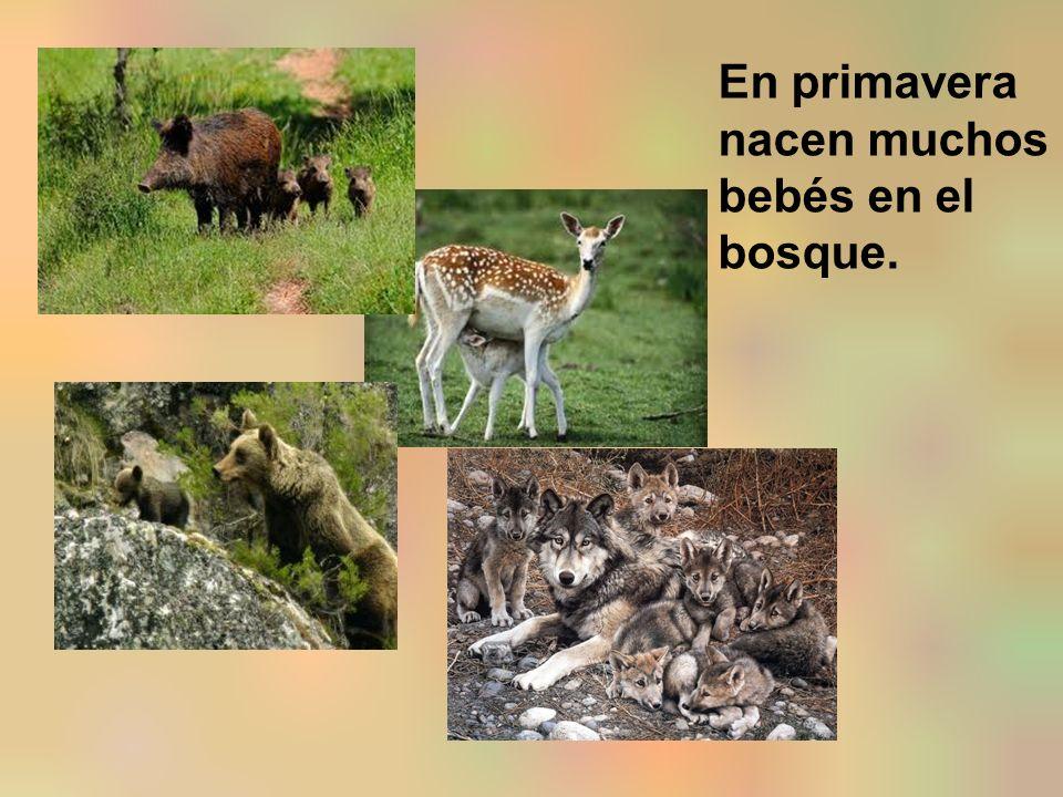 En primavera nacen muchos bebés en el bosque.
