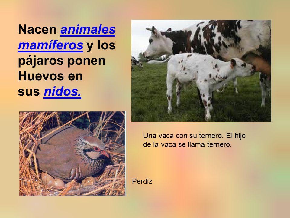 Nacen animales mamíferos y los pájaros ponenanimales mamíferos Huevos en sus nidos.nidos.