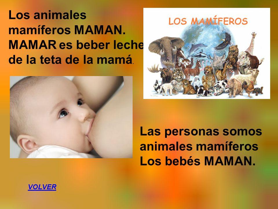 Los animales mamíferos MAMAN. MAMAR es beber leche de la teta de la mamá.