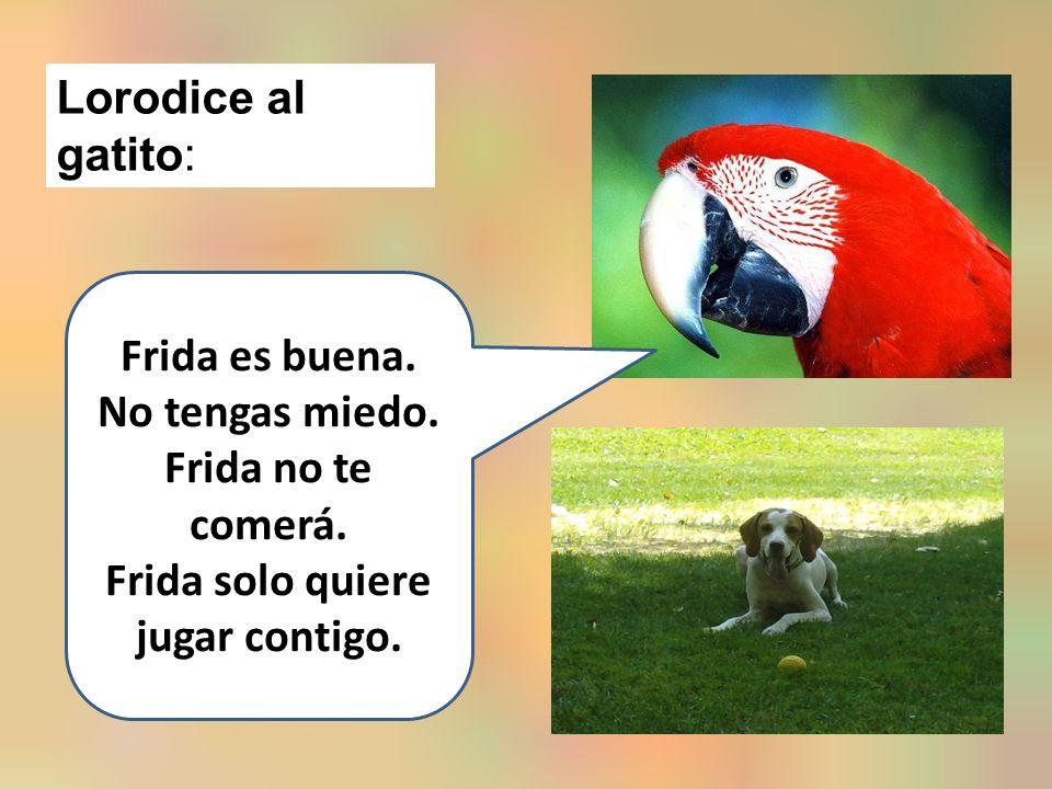 Lorodice al gatito: Frida es buena. No tengas miedo.
