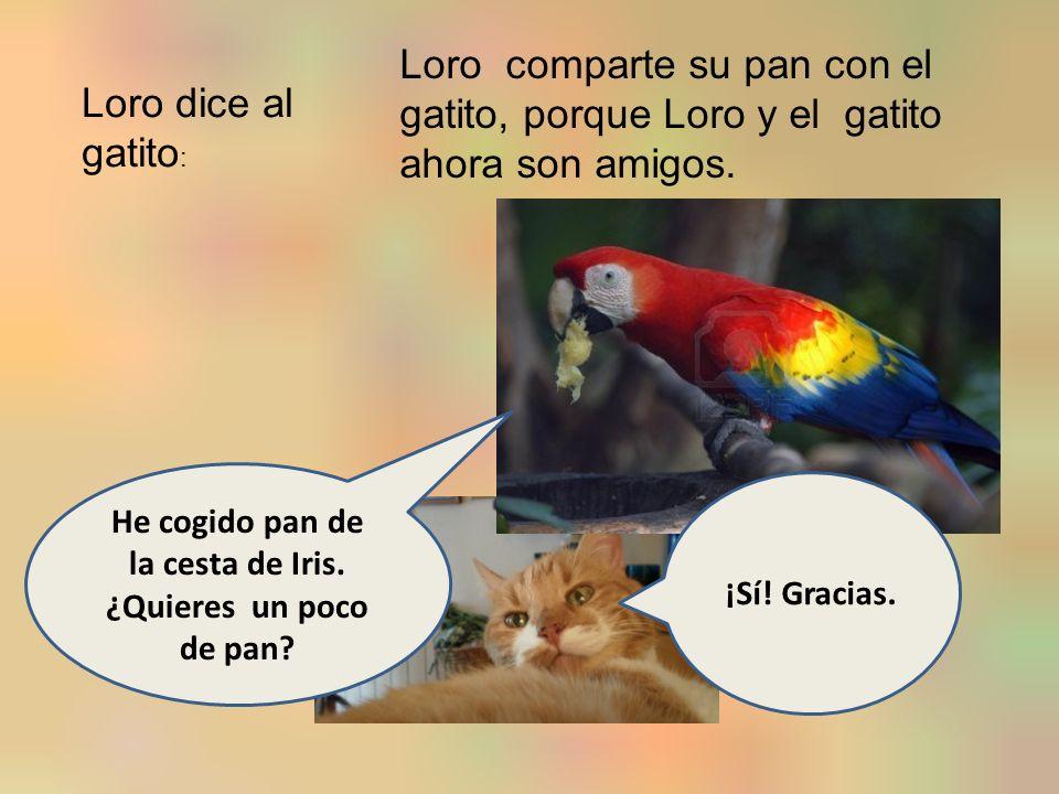 Loro dice al gatito : Loro comparte su pan con el gatito, porque Loro y el gatito ahora son amigos.