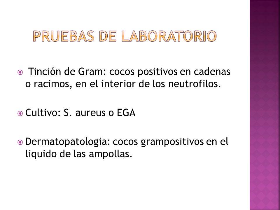  Tinción de Gram: cocos positivos en cadenas o racimos, en el interior de los neutrofilos.  Cultivo: S. aureus o EGA  Dermatopatologia: cocos gramp