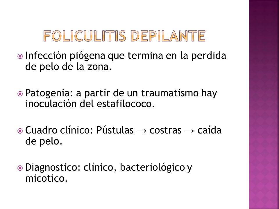  Infección piógena que termina en la perdida de pelo de la zona.  Patogenia: a partir de un traumatismo hay inoculación del estafilococo.  Cuadro c