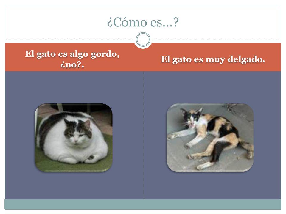 El gato es algo gordo, ¿no?. El gato es muy delgado. ¿Cómo es…?